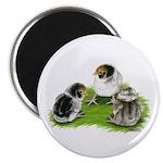 Creme Brabanter Chicks Magnet