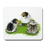 Creme Brabanter Chicks Mousepad