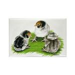 Creme Brabanter Chicks Rectangle Magnet (10 pack)