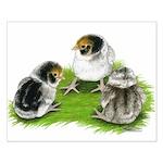 Creme Brabanter Chicks Small Poster