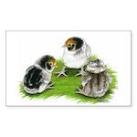 Creme Brabanter Chicks Rectangle Sticker