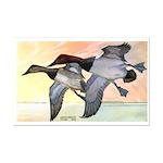 Canvasback Duck Mini Poster Print