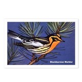 Blackburnian Warbler Bird Postcards (Package of 8)