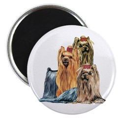 "Yorkshire Terrier Yorkie Collage 2.25"" Magnet (10"