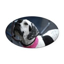 White and Black Pointer Oval Car Magnet