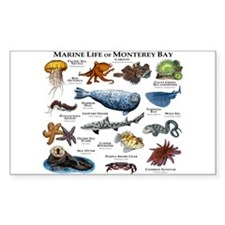 Marine Life of Monterey Decal