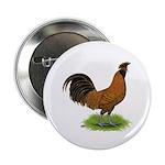 Gold Brabanter Rooster 2.25
