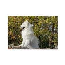 Fall Samoyed Rectangle Magnet