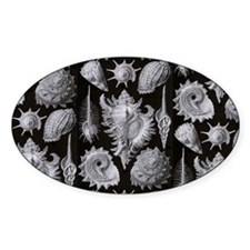 Haeckel Shell Sheet all over tee Decal