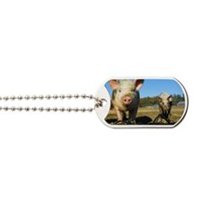 pigs2 Dog Tags
