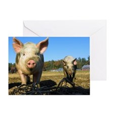 pigs2 Greeting Card