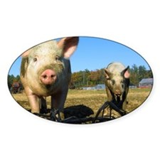 pigs2 Decal