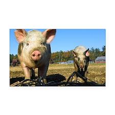pigs2 Rectangle Car Magnet