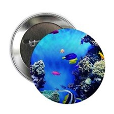 "Monterey Bay Aquarium  2.25"" Button"