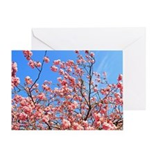 Spring cherry Greeting Card