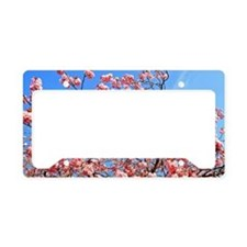 Spring cherry License Plate Holder