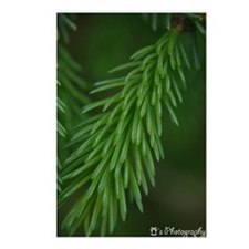 Fresh Pine Postcards (Package of 8)
