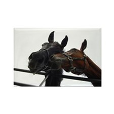 Horse Chewing on the Fence Rectangle Magnet (10 pa