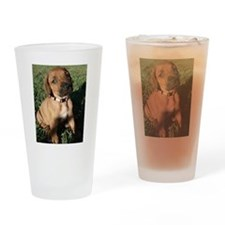 Rhodesian Ridgeback puppy  Drinking Glass