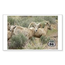 bighorn on 66 Decal
