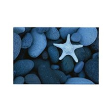 Blue_Starfish Rectangle Magnet