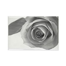 Beautiful rose Rectangle Magnet