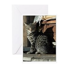 Gray Tabby Barn Cat Greeting Cards