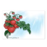 Strawberries! Postcards (8)