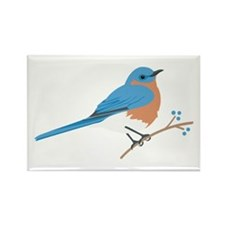 Eastern Bluebird Magnets