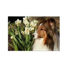 Sheltie Spring Rectangle Magnet
