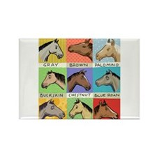 Horse Color Chart Magnets