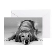 Golden Retriever with Sympathy Greeting Cards