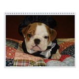 English bulldog Wall Calendars