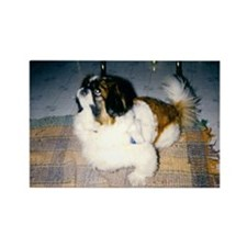Pekingese Dog Rectangle Magnet