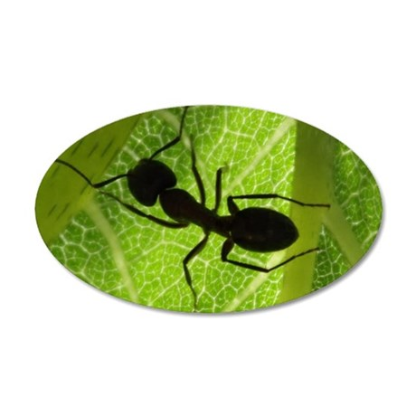 Shadow of the ant 35x21 Oval Wall Decal