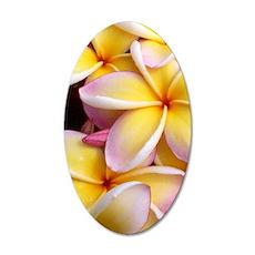 Hawaiian Plumeria 35x21 Oval Wall Decal