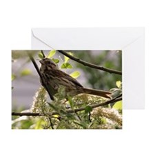 Sparrow in the Morning Sun Greeting Card