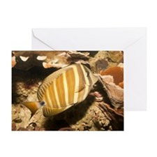 Sailfin Tang (Zebrasoma veliferum) Greeting Card