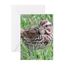 Sparrow in the Grass Greeting Cards