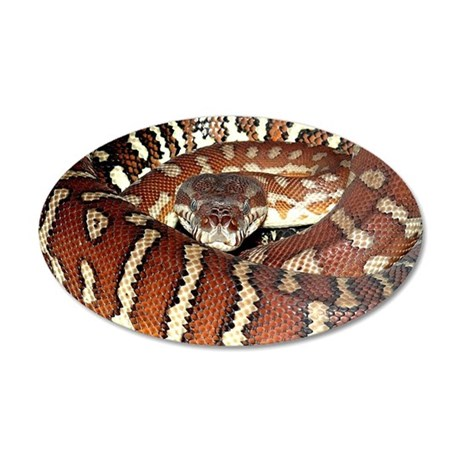 Bredl's Python 35x21 Oval Wall Decal