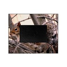 Fluffy Squirrel Picture Frame