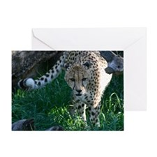 Hunting Prowling Cheetah at the Zoo Greeting Card