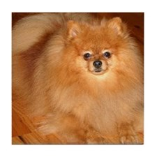 Orange Pomeranian Tile Coaster