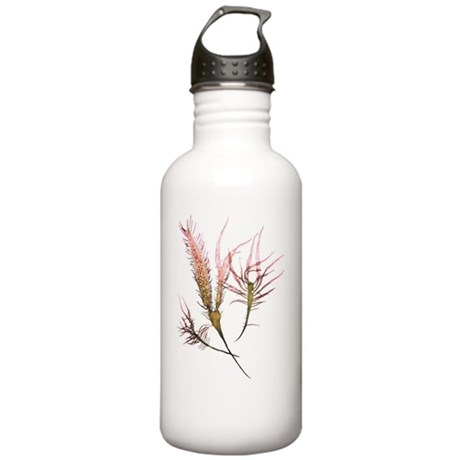 Seaweed Crustacean Stainless Water Bottle 1.0L