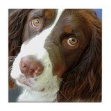 Sweet Molly Springer Spaniel Tile Coaster