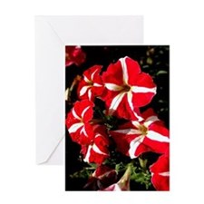 Candy Striped Petunias Greeting Cards