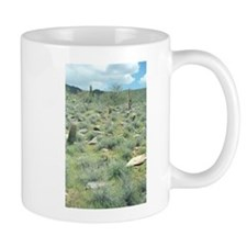 Stepping Stones Desert Mugs