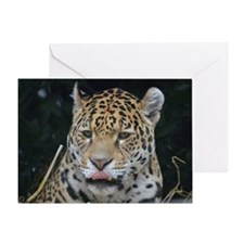 Jaguar Licking His Nose Greeting Card
