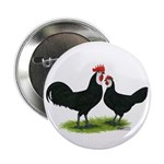 Whitefaced Spanish Chickens Button