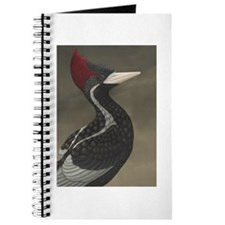 Ivory-billed Woodpecker (Campephilus princ Journal